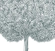 Black Tree 222X207